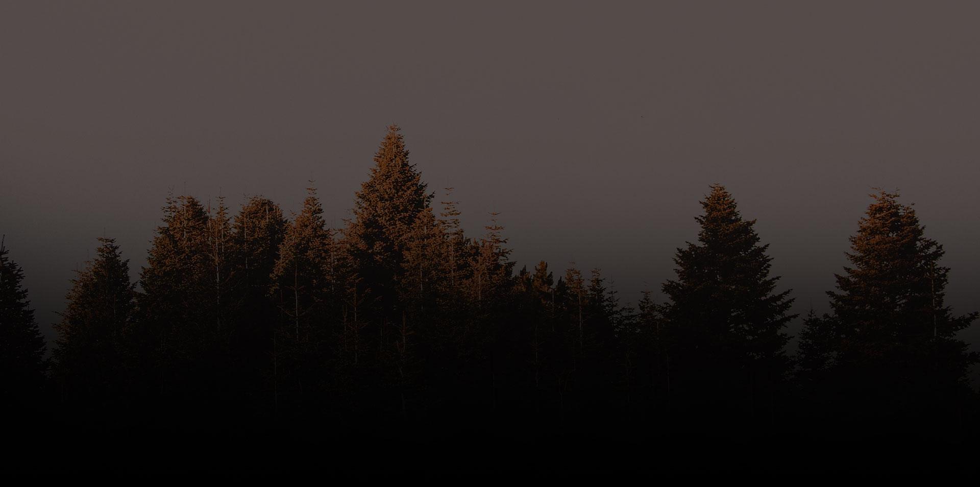 Tactacam 5.0 2020 Background